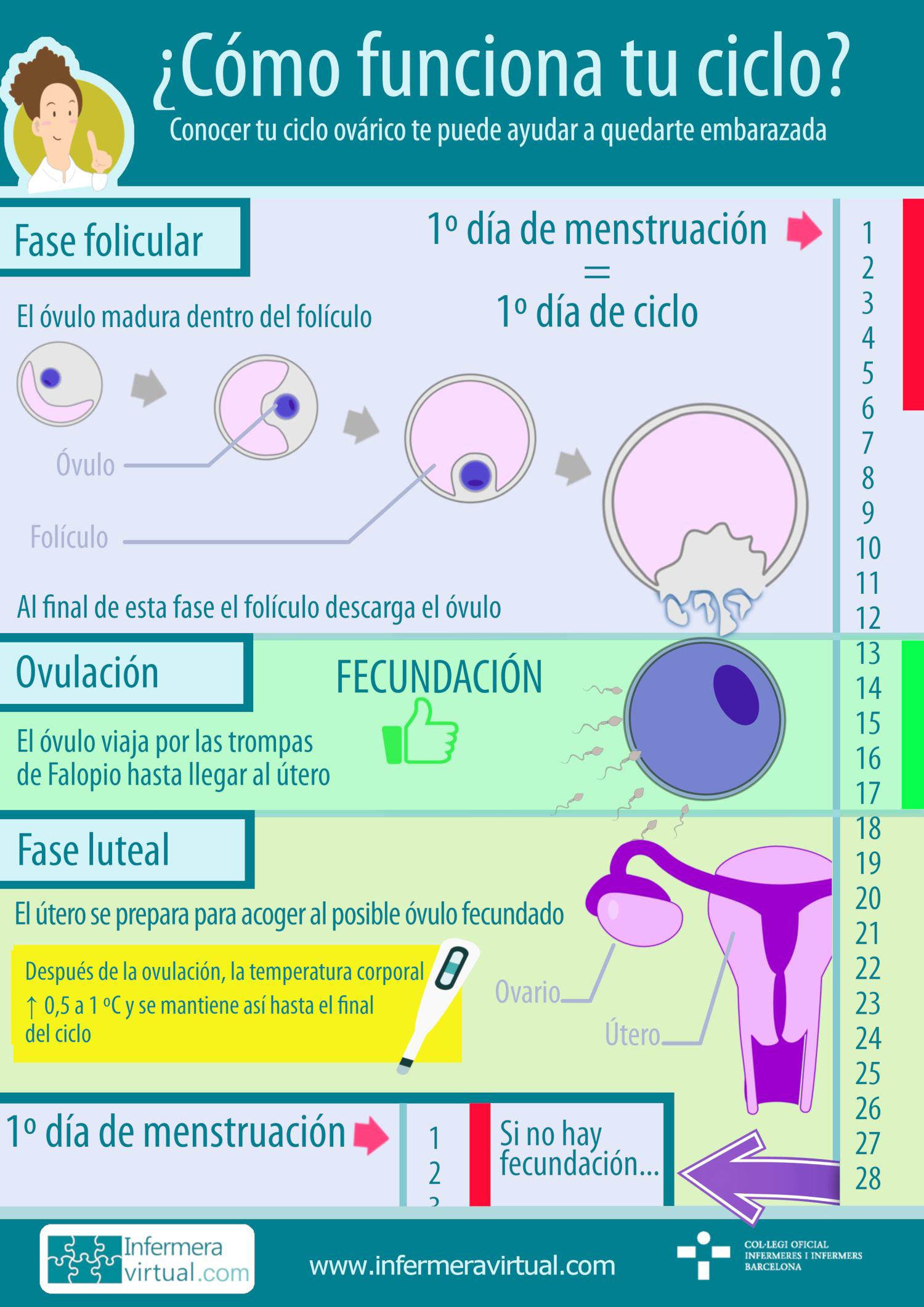 Infermeravirtual Com Funciones Del Sistema Actividades De